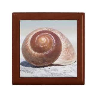 Seashell On Beach | St. Petersburg, Fl Small Square Gift Box