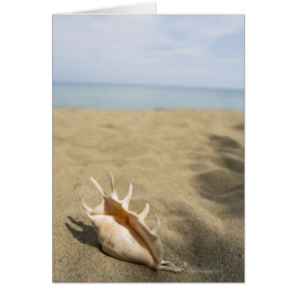 Seashell on sandy beach card