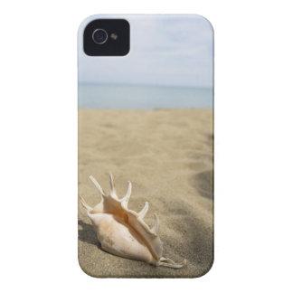 Seashell on sandy beach iPhone 4 Case-Mate cases