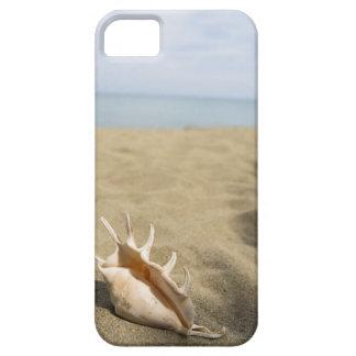 Seashell on sandy beach iPhone 5 cover