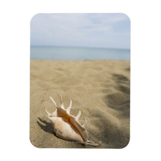 Seashell on sandy beach magnet