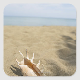 Seashell on sandy beach square sticker
