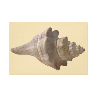 Seashell on the Beach Canvas Print