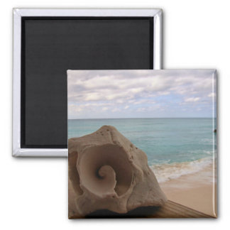 Seashell on the Beach Photo Magnet