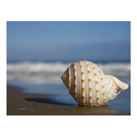 Seashell on the Shore Postcard