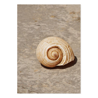 SeaShell Pack Of Chubby Business Cards
