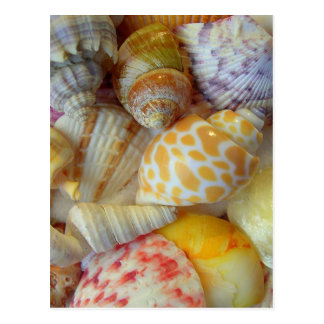 Seashell Photography Blank Postcard