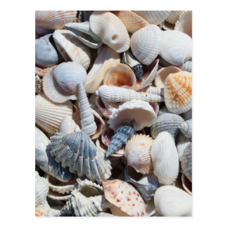 Seashell Postcard
