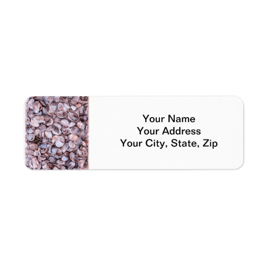 Seashell Return Address Lables Return Address Label