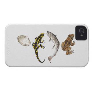 Seashell, Salamander, Salmon iPhone 4 Cover