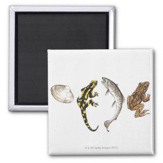 Seashell, Salamander, Salmon Magnet