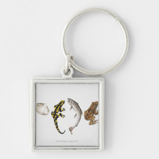 Seashell, Salamander, Salmon Silver-Colored Square Key Ring
