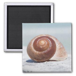 Seashell | St. Petersburg, Florida Magnet