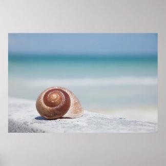 Seashell | St. Petersburg, Florida Poster