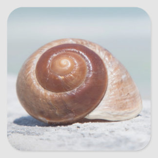 Seashell | St. Petersburg, Florida Square Sticker