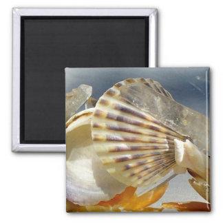 Seashell Sunshine Magnet