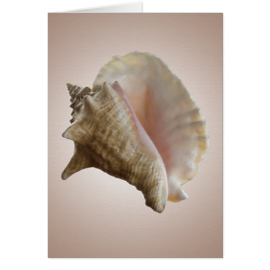 Seashelll Note Card