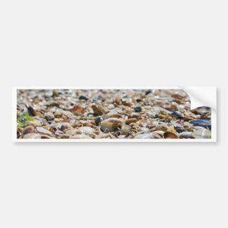 SeaShells Bumper Sticker