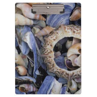 Seashells, Cape Town, Western Cape Clipboard