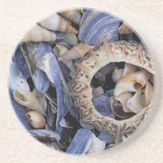Seashells, Cape Town, Western Cape Coaster