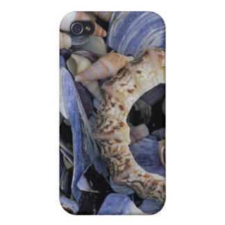 Seashells, Cape Town, Western Cape Covers For iPhone 4