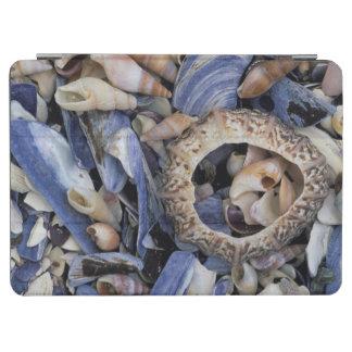 Seashells, Cape Town, Western Cape iPad Air Cover
