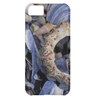 Seashells, Cape Town, Western Cape iPhone 5C Case