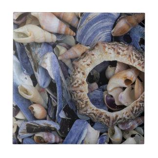 Seashells, Cape Town, Western Cape Tile