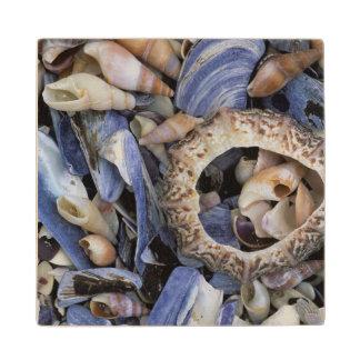 Seashells, Cape Town, Western Cape Wood Coaster