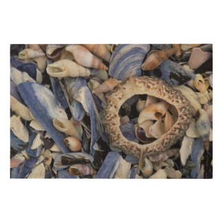 Seashells, Cape Town, Western Cape Wood Wall Decor