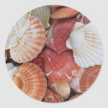 Seashells - close up sea shell photograph round stickers