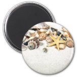 Seashells Magnet