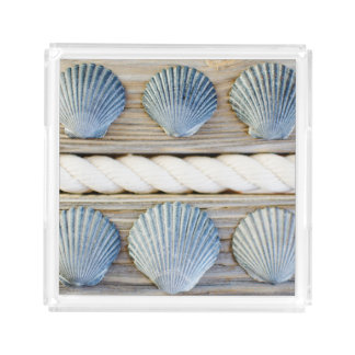 Seashells | New York City