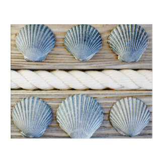 Seashells | New York City Acrylic Print