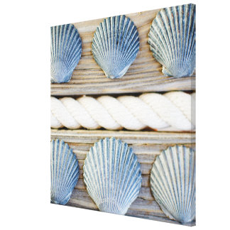 Seashells | New York City Canvas Print