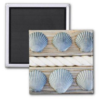 Seashells | New York City Magnet