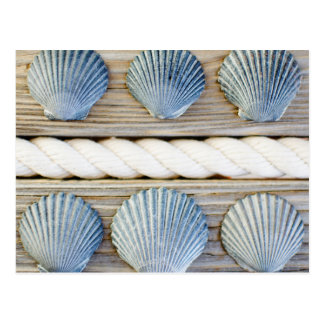 Seashells | New York City Postcard