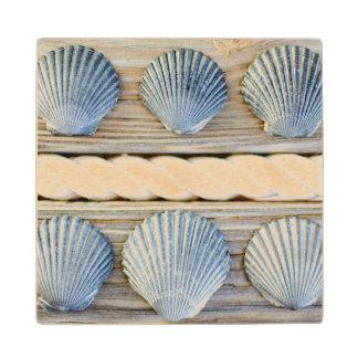 Seashells | New York City Wood Coaster