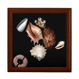 Seashells No. 15 Elegant Jewelry Box
