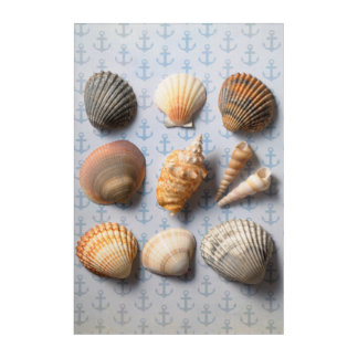 Seashells On Anchor Backdrop Acrylic Print