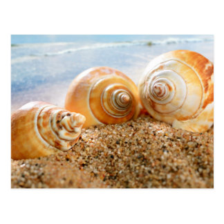 Seashells On Beach Postcard