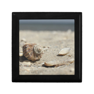 Seashells On Sand By The Sea Gift Box
