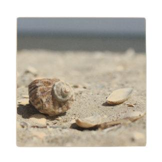 Seashells On Sand By The Sea Wood Coaster