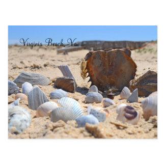 Seashells on the Beach by Shirley Taylor Postcard