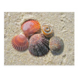 Seashells on the Beach Coordinating Items Post Card