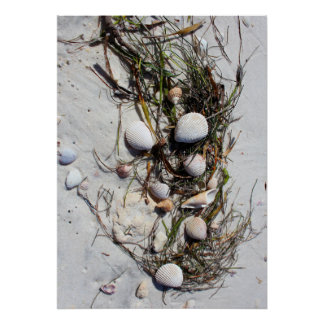 Seashells on the beach poster