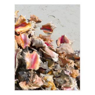 Seashells on the Beach | Turks and Caicos Photo Post Cards