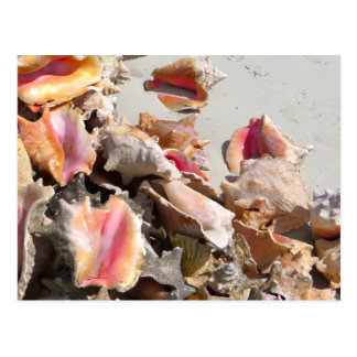 Seashells on the Beach   Turks and Caicos Photo Postcard