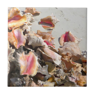 Seashells on the Beach | Turks and Caicos Photo Small Square Tile