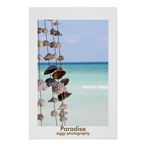 seashells paradise poster print